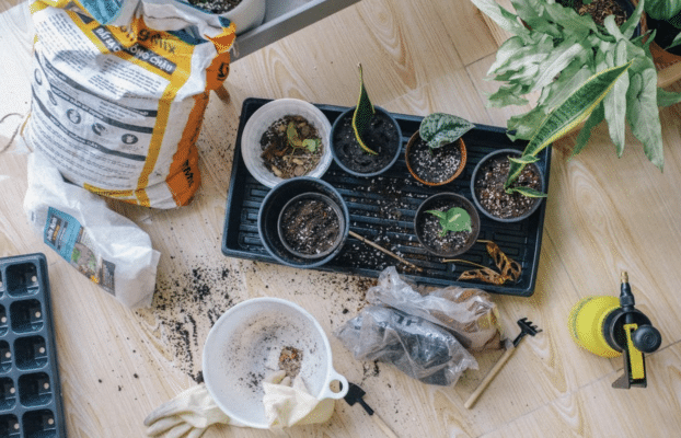 Kickstart your gardening with our top tips