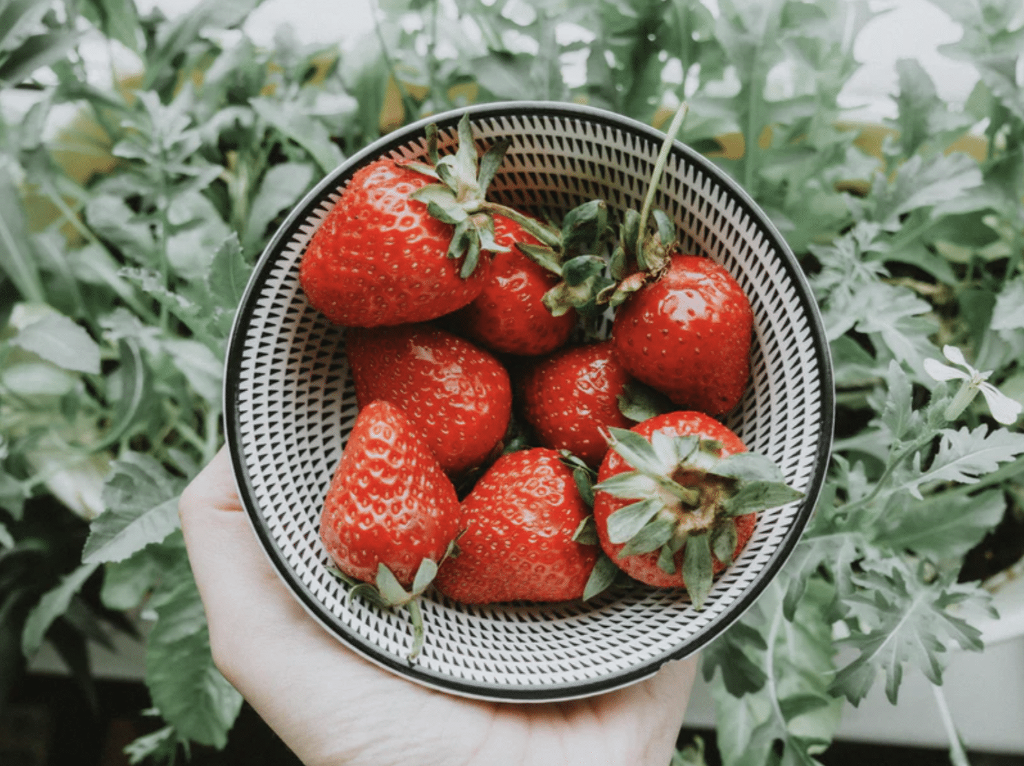 What fruit and vegetables can you grow in your London home?